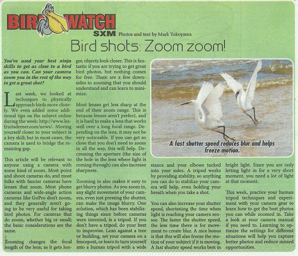 Bird-Watch-birdshots-zoom-web