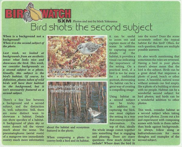 BirdWatch-BirdShots-2ndSubject-web