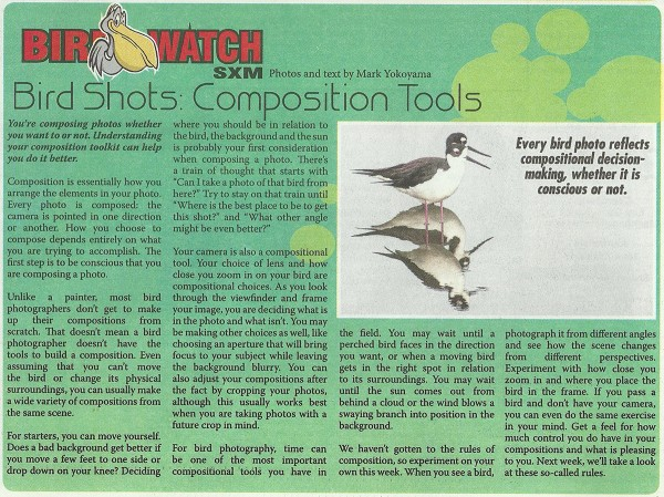 BirdShots-Composition-Tools-web