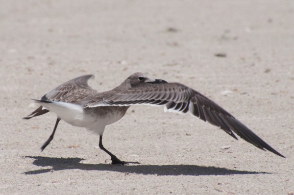 Some birds prefer a running takeoff, which can offer some dynamic moments.