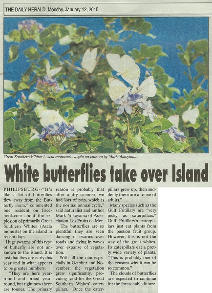 DailyHerald-white-butterflies-web