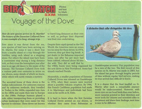 BirdWatch-Voyage-of-the-Dove-web