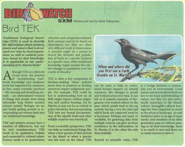 Bird-Watch---Bird-TEK-web