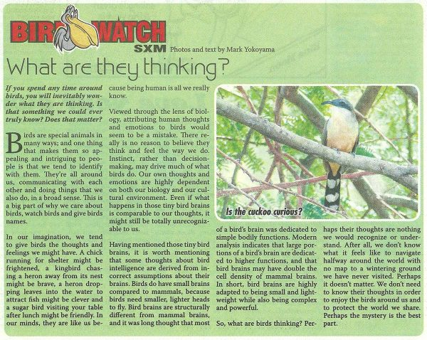 Bird-Watch---What-are-they-thinking-web