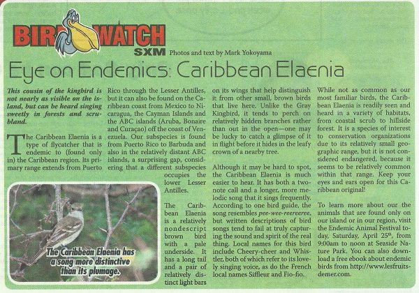 Bird-Watch-Caribbean-Elaenia-web
