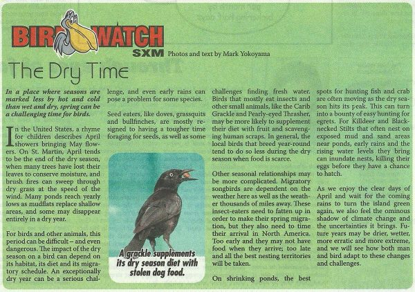BirdWatch-TheDryTime-web