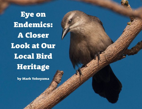Eye-on-Endemics