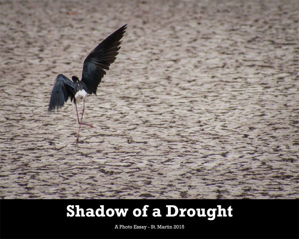 Shadow-of-a-Drought-web