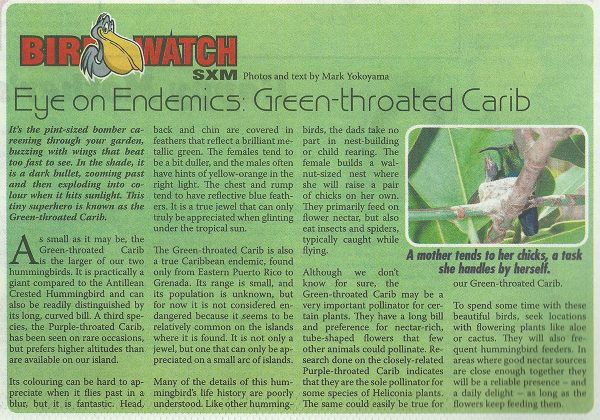 BirdWatch-EoE-GreenThroatedCarib-web