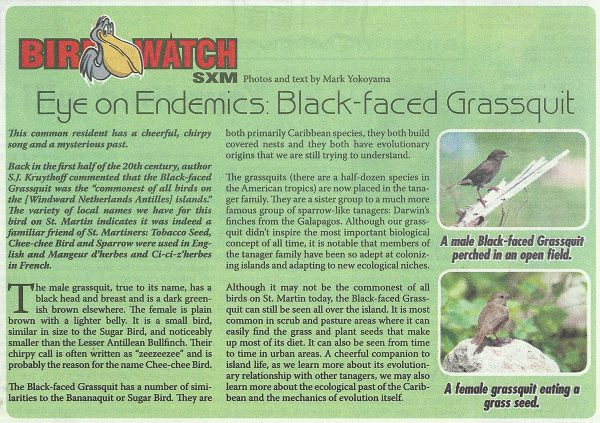 Bird-Watch-Endemics-Black-faced-Grassquit-web