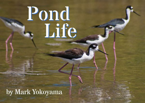 pond-life-cover-web