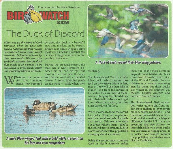 BirdWatch-DuckofDiscord-web