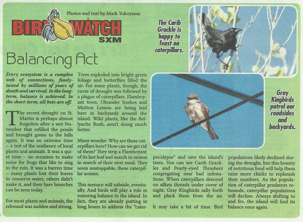 BirdWatch-Balancing-Act-web