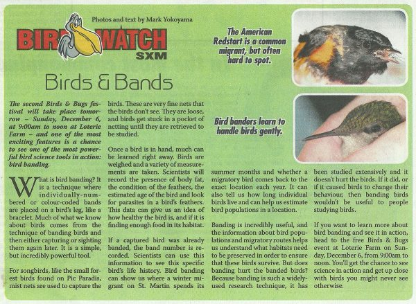 BirdWatch-BirdsNBands-web