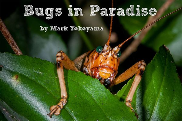 Photos and poems from the free children's ebook Bugs in Paradise will be on display at this Sunday's Birds & Bugs event at Loterie Farm.