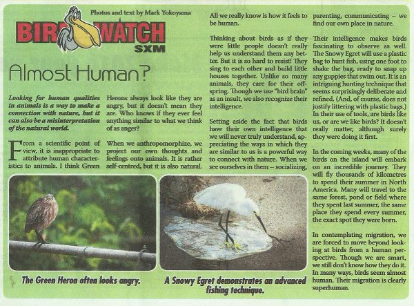BirdWatch-AlmostHuman-web