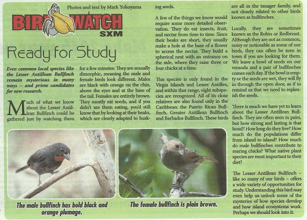 BirdWatch-ReadyForStudy-web