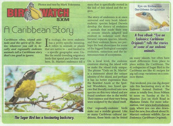 BirdWatch-Caribbean-Story-web