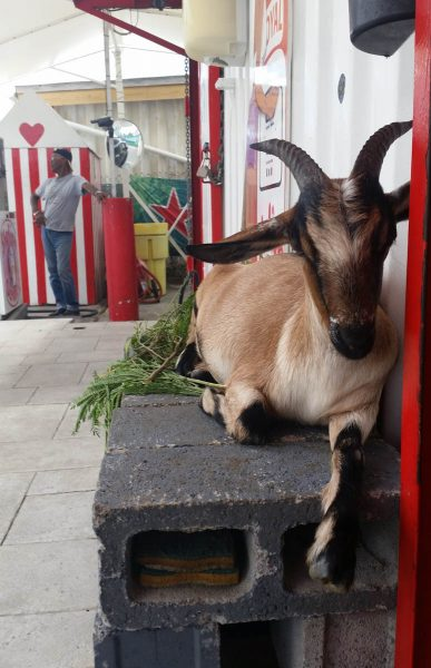 Man, gas station, goat
