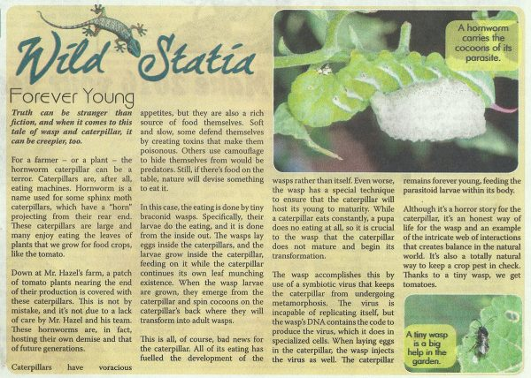 Wild-Statia-Forever-Young-web