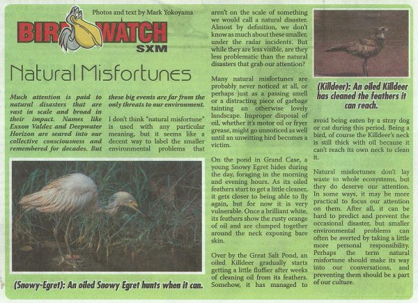 Bird-Watch-Natural-Misfortunes-web