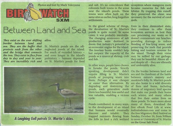birdwatch-betweenlandsea-web