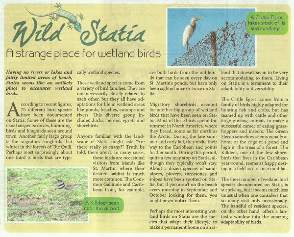 Wild-Statia---Strange-Place-for-Wetland-Birds-web