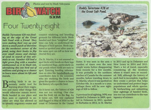 bird-watch-four-twenty-eight