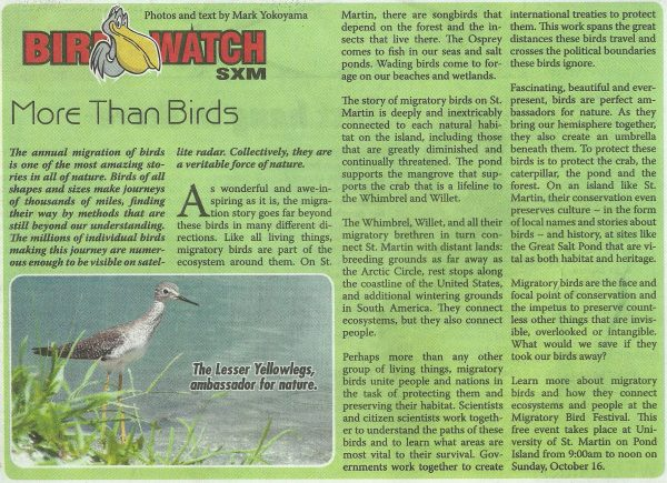 bird-watch-more-than-birds