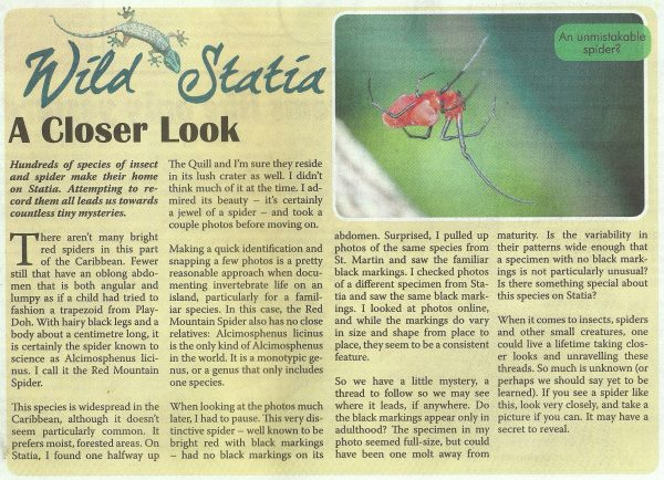 wild-statia-a-closer-look