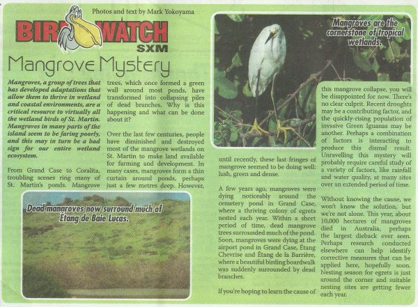 birdwatch-mangrovemystery