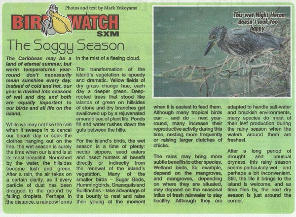 bird-watch-soggy-season